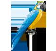 Ara Papagei - Gefieder 5