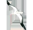 Albatros - Gefieder 5