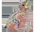 Krähe - Gefieder 51