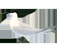 Brandseeschwalbe - Gefieder 5