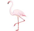 Flamingo - Gefieder 68